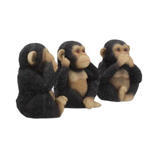 Chimp 4